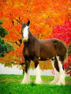 #HORSE##ANIMALS##CUT#