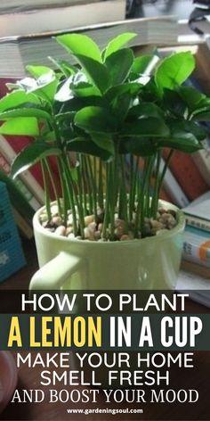 Growing Vegetables, Growing Plants, Regrow Vegetables, Growing Herbs Indoors, Growing Fruit Trees, Growing Succulents, Planting Vegetables, Container Gardening, Gardening Tips