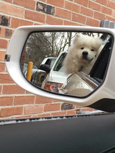 Adorable Samoyed, Check out all of our other Samoyed Dog photos updated weekly. Cute Puppies, Cute Dogs, Animals And Pets, Cute Animals, Dog Whistle, Samoyed Dogs, Doja Cat, Dog Photos, My Animal