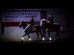 STARS INTO THE NIGHT, CEMI - Centro Equestre Minorchino Italiano - Guardalo