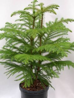41 best plant things group 2 images plants house plants - Temperature to keep house in winter ...
