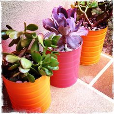 looking for ways to recycle milk formula tins knitknotnat: Formula Tin Succulent Pots