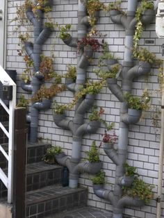 Hydroponic gardening or hydroponics is the science of growing plants using only nutrient-rich liquid as a soil replacement. Learn about hydroponics here. Diy Gardening, Hydroponic Gardening, Hydroponics, Organic Gardening, Container Gardening, Indoor Aquaponics, Aquaponics Fish, Succulent Gardening, Pvc Pipe Projects