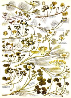 Botanical print, 1969