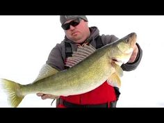 Ice fishing for massive Lake Erie walleye during the last ice of Most action came on jigging spoons tipped with large shiners within 3 feet of bottom. Ice Fishing, Best Fishing, Fishing Videos, Take The First Step, Palm, Lion, Walking, India, Woman