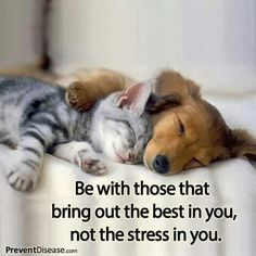 Be with those that bring out the best in you, not the stress in you