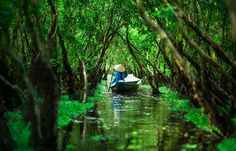 person in a boat paddling through the Tra Su Forest (Chau Doc)
