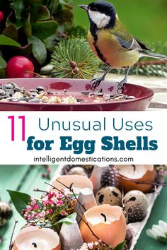 We are sharing 11 unusual uses for egg shells for a sustainable lifestyle. From shells in the garden to unusual ways to use the shells you may not have thought of. Plus 5 baked egg recipes for breakfast or brunch. These recipes are good for Christmas breakfast too. #eggs #eggshells #compost #eggshellcompost #usesforeggshells Ceramic Egg Holder, Veggie Muffins, Organic Water, Ham And Eggs, Fertilizer For Plants, Egg Recipes For Breakfast, Breakfast Casserole Sausage, Food Jar, Christmas Ornaments To Make