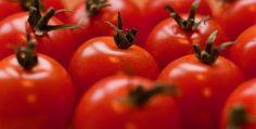 Tomato (Solanum lycopersicum) Health Benefits | Brett Elliott's Ultimate Herbal Detox