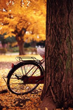 Go to New England to see the colorful leaves...Bed & Breakfast bike ride