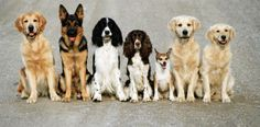 Image: Dogs