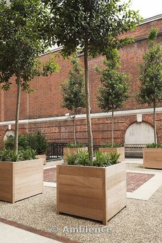 Iroko wood planters with single-stemmed evergreen trees and perennial plants set on gravel surface between york stone and red brick paving. Description from ambienceimages.co.uk. I searched for this on bing.com/images
