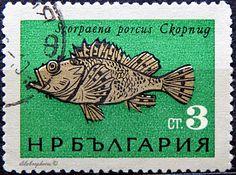 Bulgaria.  HOGFISH.  Scott 1405 A616, Issued 1965 June 10, Photo., Perf. 11 1/2, 3. /ldb.