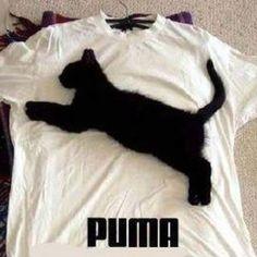 Puma ;)