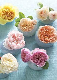 """As flores? Ah! As flores são mágicas.. """"Nasceram pra fazer seu olhar brilhar.. """"Toda vez que olhar pra elas... """"Ah! Ainda falta alguém? """"Falta você... """"Olha você!...  """"Que obra prima de Deus... """"Escolhida por Ele para viver e ser feliz."""" (Sirlei L. Passolongo)  """"Cassia"""" ♥"""