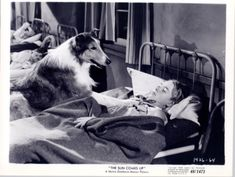 """Lassie in the movie """"The Sun Comes Up""""!"""