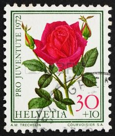 SWITZERLAND - CIRCA 1972: a stamp printed in the Switzerland shows Rose, Papa Meilland, Flowering Plant, circa 1972