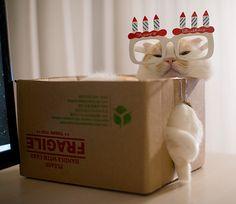 11-17-2013 Happy 7th Birthday to Pokke Boy!