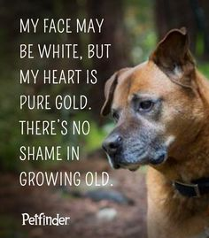 It really doesn't get better than a senior dog. Learn more about what makes older pets extra special. #PetfinderSenior