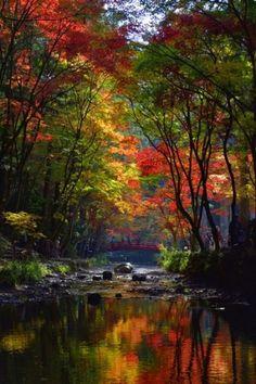 "lifeisverybeautiful:  ""Autumn Leaves, Shizuoka, Japan via GANREF  """