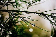 Foxografia | Kinga Joanna Rogowska: Kropla do kropli