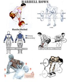 Barbell Row - Back Exercises Healthy Fitness Workouts Arms Low