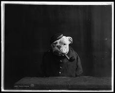 Rare Portraits of Bulldogs Taken Around 1905 - My Modern Metropolis