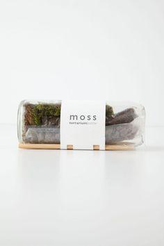 moss terrarium in very cool packaging