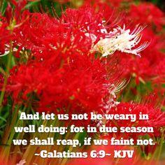 ~Galatians 6:7~ (KJV)                                                                                                                                                                                 More