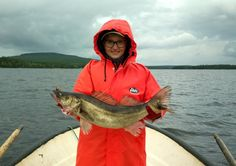 A zander caught with a net weighing 3.3 kg from Lake Miekojärvi in Pello in Lapland