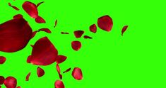 Ad: red rose petals screen transition horizontal flying flowing on chroma key, green screen background, with alpha channel, holiday love, relationship and valentine day Red Rose Petals, Red Rose Flower, Lilac Flowers, Blossom Flower, Flower Petals, Red Roses, Green Screen Video Backgrounds, Green Background Video, Love Background Images