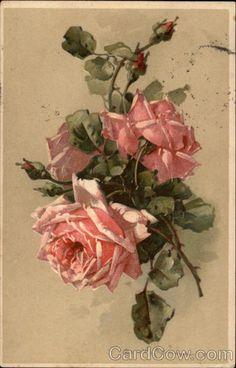 Pink Roses C. Klein Flowers