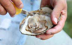 No trip to Brittany would be complete with tasting or learning more about Oysters. You can learn about oyster farming aboard a boat and sample some with wine.