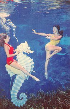Weeki Wachee Spring, mermaids at play, vintage Florida postcard   about 1960…