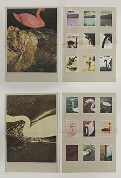 """ialu:  """"black meat"""" bypaul kooiker archivo2008, 30x42cm, edition 5000"""