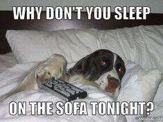 You sleep on the sofa