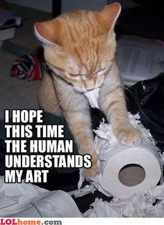 idk what it is with cats and toilet paper.... lol.