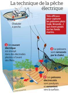 Pêche électrique : refusée par lEurope
