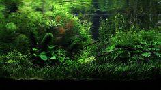 https://flic.kr/p/nWLsxo   Deep Green Silence - Final Shot   IAPLC 2012 Rank 907