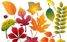 folhas de outono - Pesquisa Google