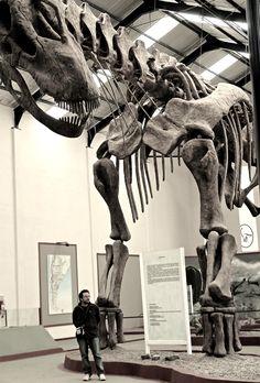 "cloudair: ""Huge dinosaur "" Argentinosaurus. Cretaceous. Argentina"