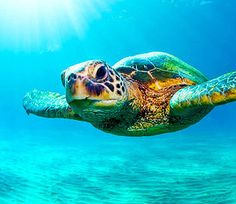 Turtles of Key West - maybe the guys can go snorkeling with the turtles?