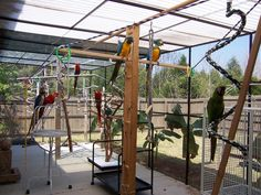 Happy Macaws! And good instructions on how to build an aviary.