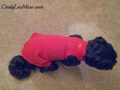 No-Sew Dog Coat
