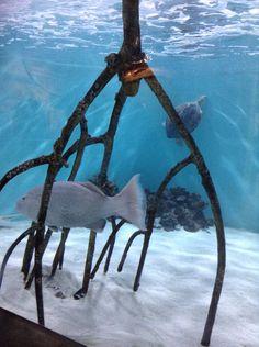 The Aquarium, Tampa FL