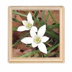 A personal favorite from my Etsy shop https://www.etsy.com/listing/278607960/white-and-yellow-flower-print-wood