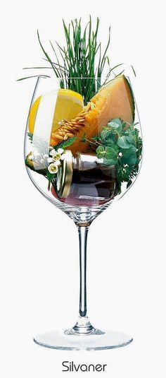 Silvaner or Grüner Silvaner | Aromas of cantaloupe, lemon peel, blossom, grass, herbs, honey | Alsace, France & Franconia, Germany