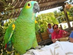 The birds of Periwinkle Park Campground...a must see when visiting Sanibel Island, FL.