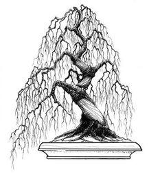 Resultado de imagem para bonsai tree sketch