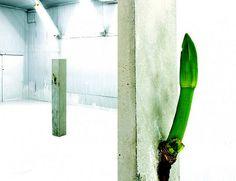 Azuma Makoto: botanical sculpture